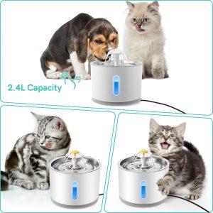 kat en hond petfontein