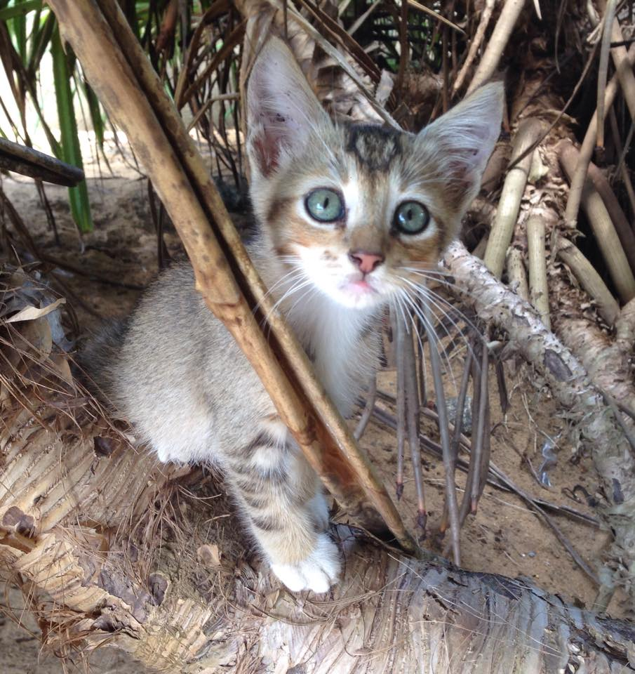 katten opvang petfontein