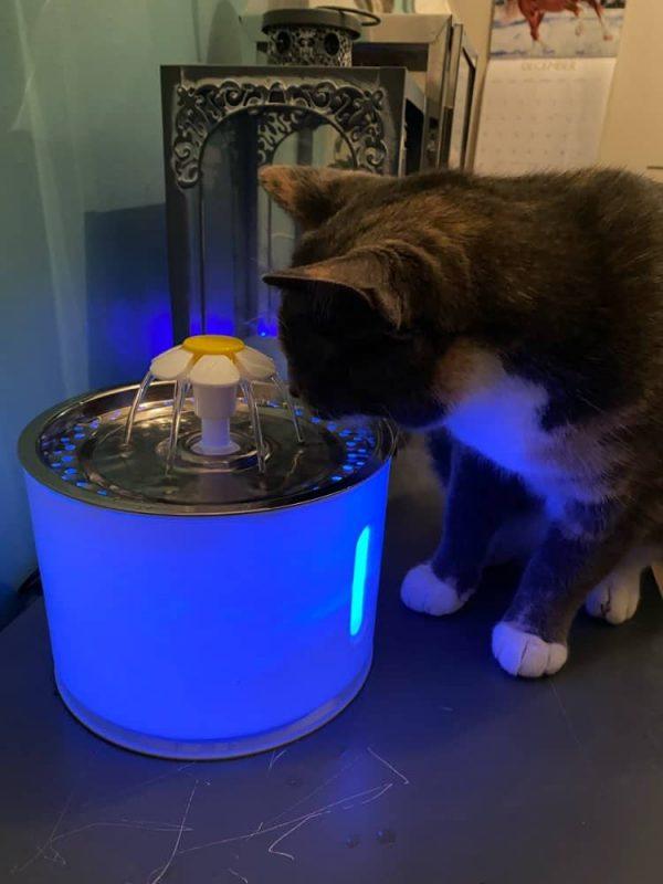 petfontein LED