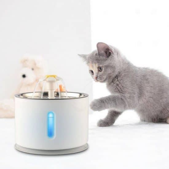 petfontein en grijze kat